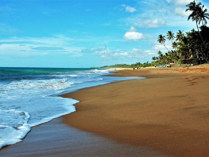 Изображение пальм и моря