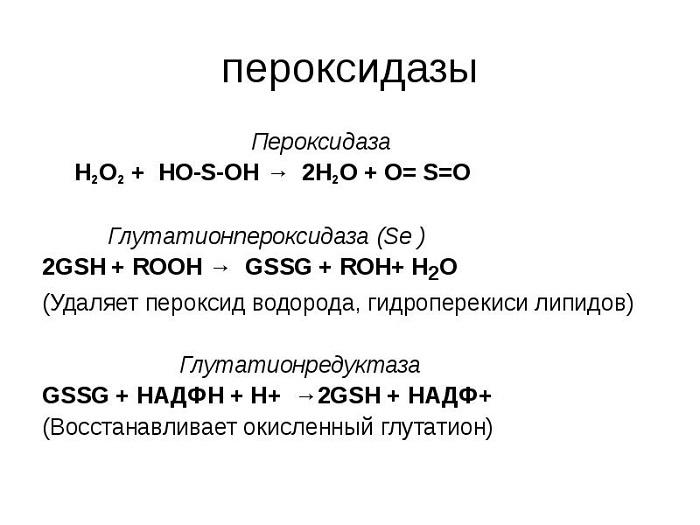 Пероксидаза функции