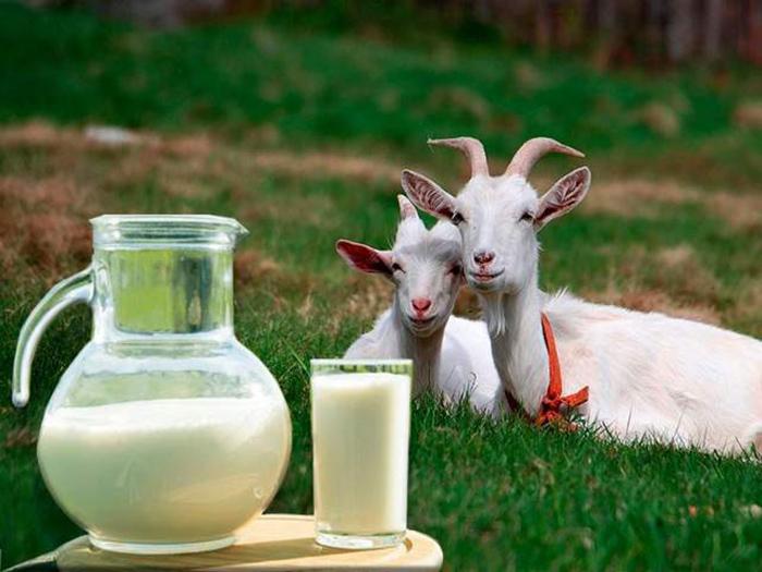 Молоко и две козы на заднем фоне