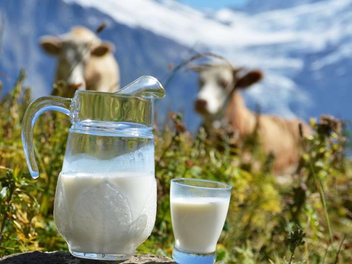 Молоко в кувшине и стакане и две буренки