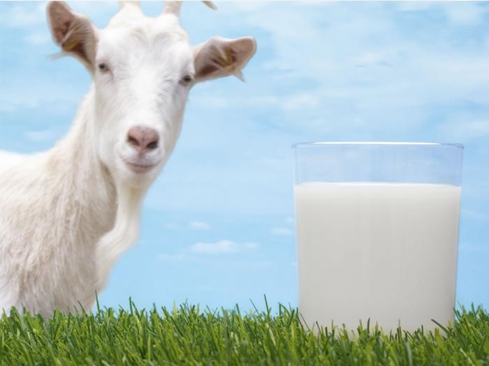 Полезность козьего молока