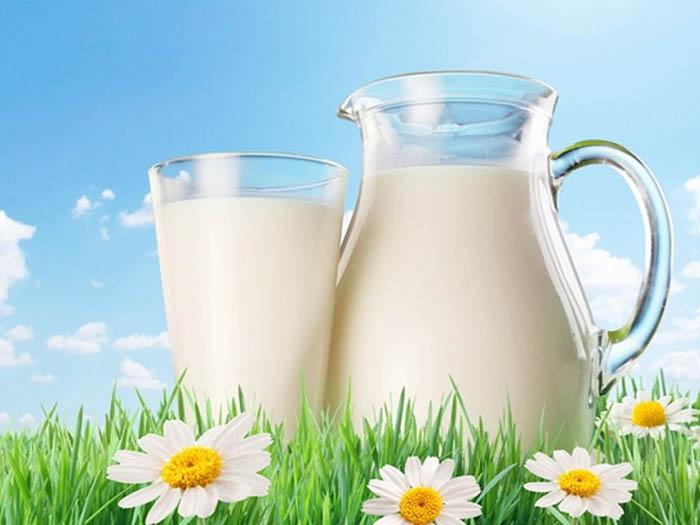 Жирность молока у коровы