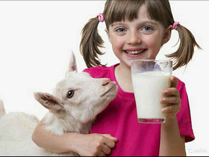 Девочка со стаканом молока и козой