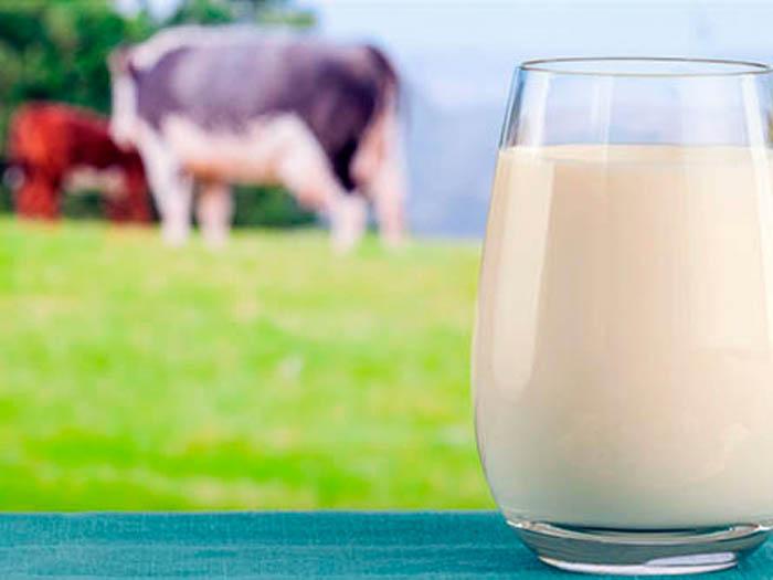 Средняя жирность молока у коровы