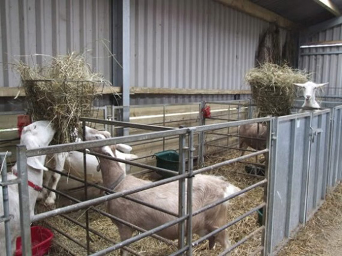 Организация питания в козлятнике