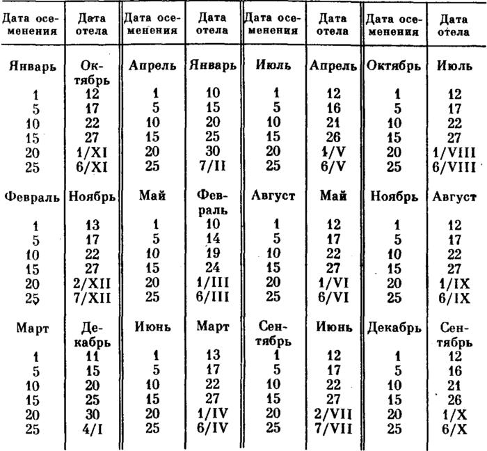 Таблица отела коров
