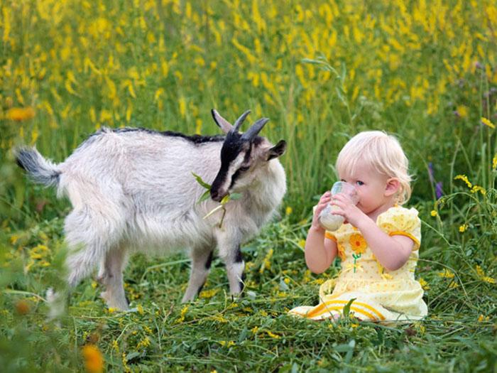 Девочка пьет молоко, рядом с ней коза