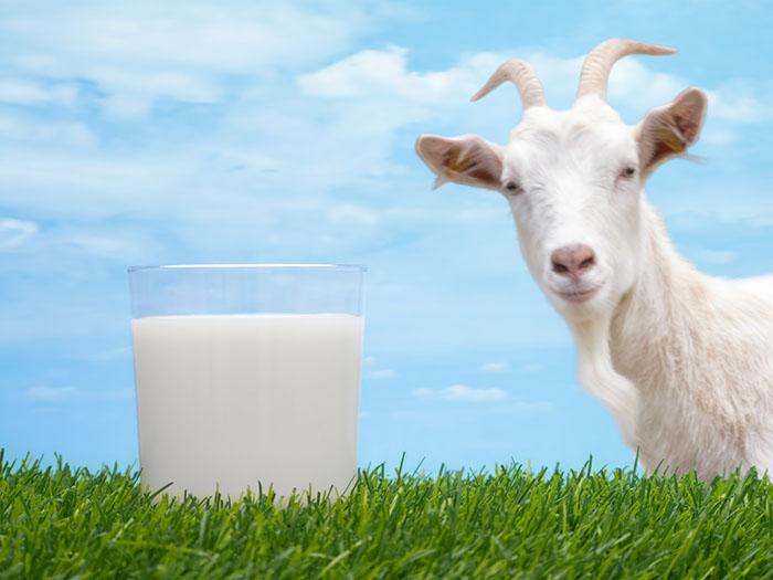 Стакан молока и козочка
